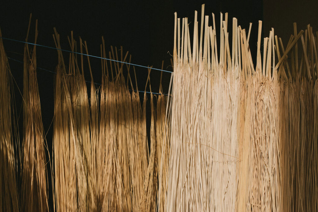 Toquilla straw hanging up to dry